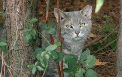 Community Cats Need Your Help in Mountain View on 4/21
