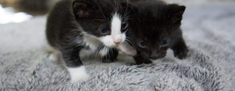 Adopt Two Kittens for the Same Adoption Fee as One
