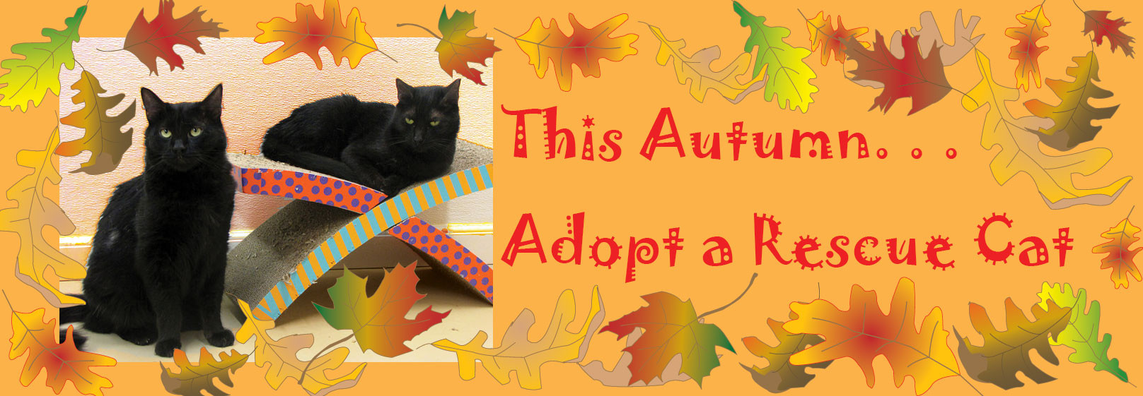 Autumn_adopt_a_cat