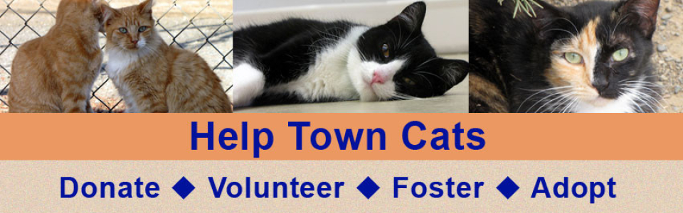 HelpTownCatsNov