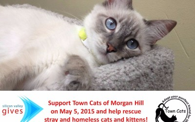 Be a champion for the community cats on May 5, 2015!