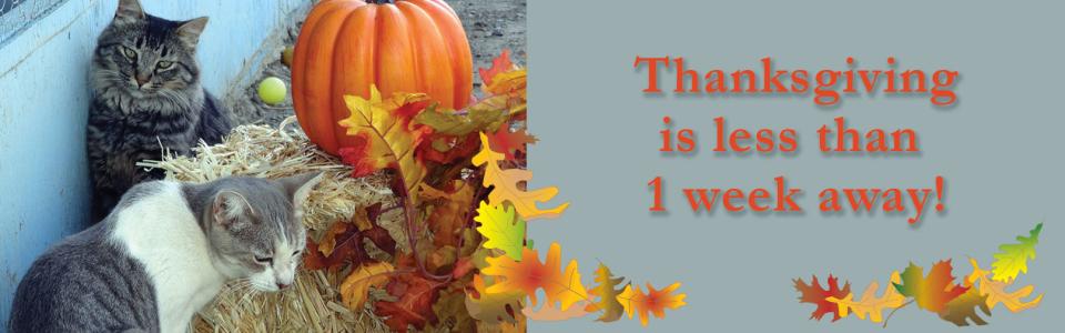 Thanksgiving1week