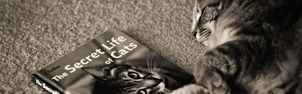 A Day in the Life of a Cat for Hire