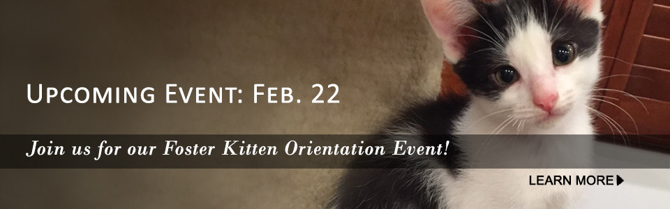 Join us for our Foster Orientation event, Feb 22