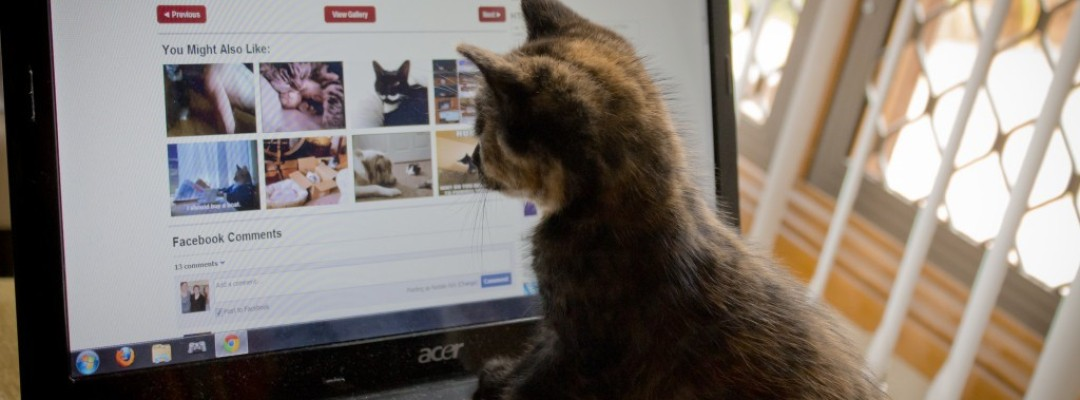 volunteer kitten cute computer search