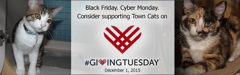 Schedule a #GivingTuesday  gift in support of Town Cats today!