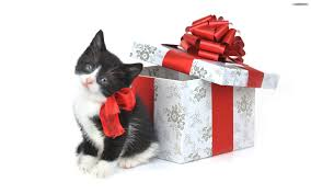 10 Ideas for Holiday Gifts for Catlovers