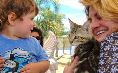 """Satori Cellars Winery """"Town Cats Day"""" was a hit for the cats!"""