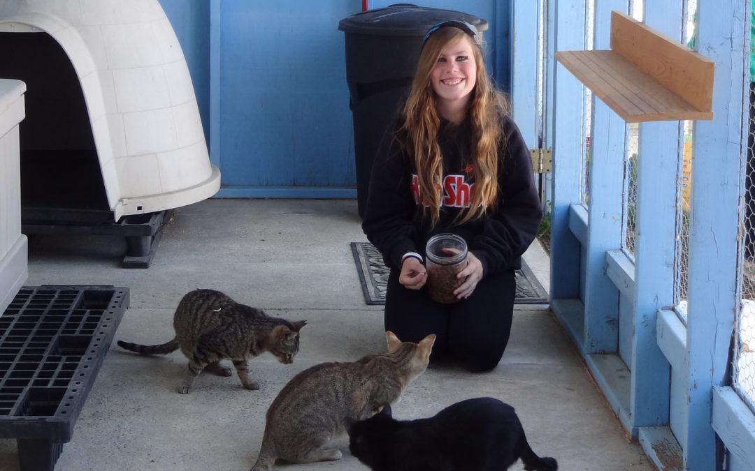 Wanted: Cat Whisperers to Help Community Cats