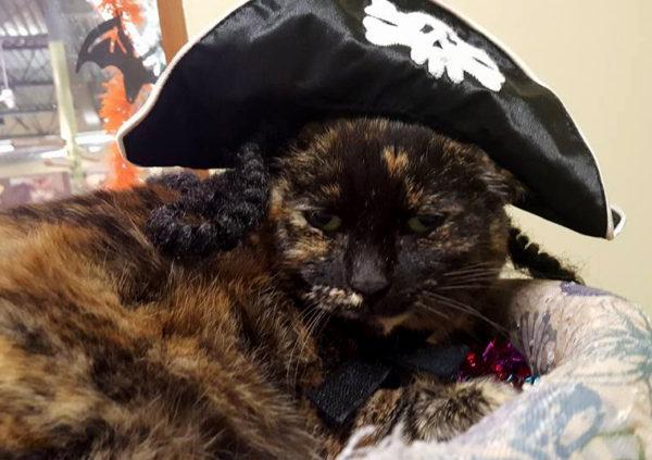 jessie-sleeping-pirate