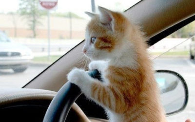 Feral Freedom Drivers Wanted!