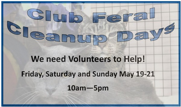 Club Feral Cleanup Days – Help us say Goodbye to Club Feral!