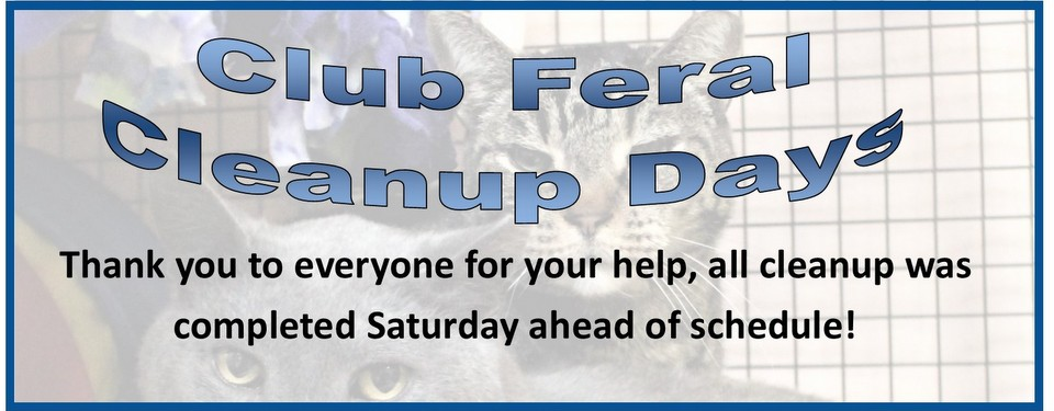 Club Feral/Albert cleanup Completed