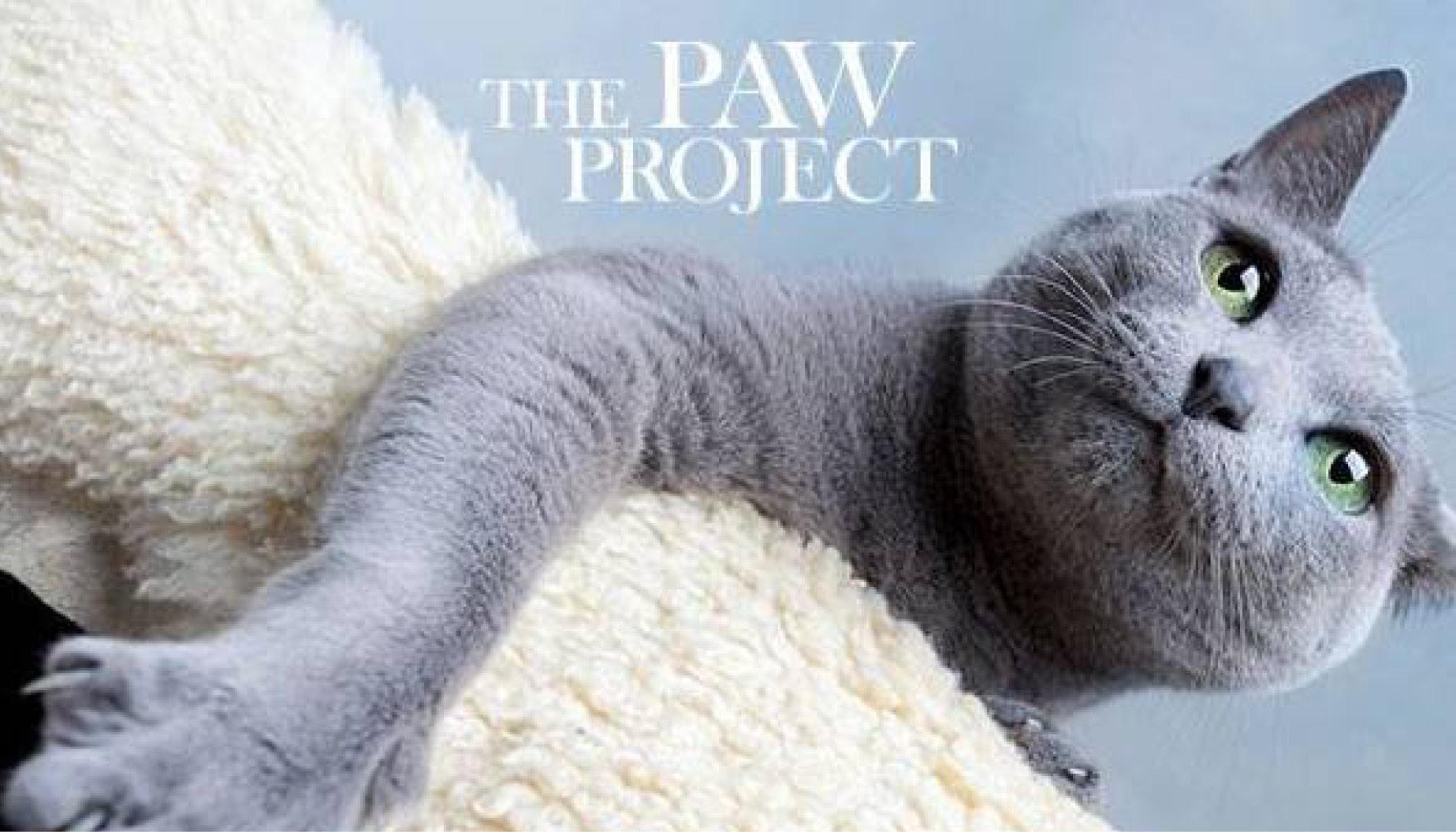 Feral Cat Rescue Bay Area