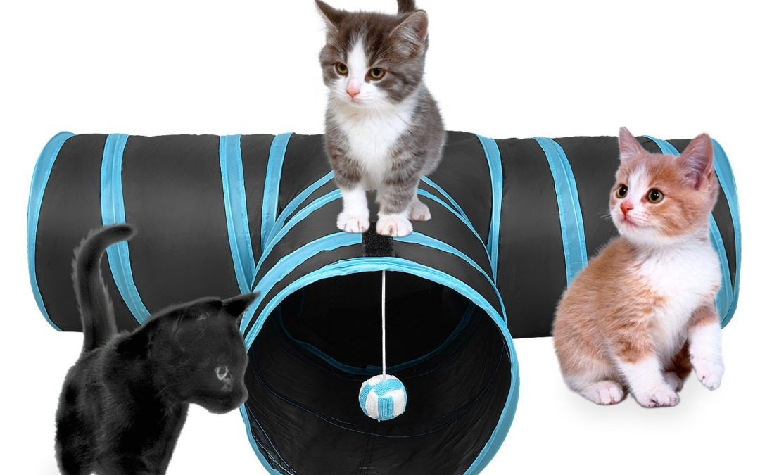 Top 5 Fun Toys To Get Your Kitten Just In Time For The Holidays!