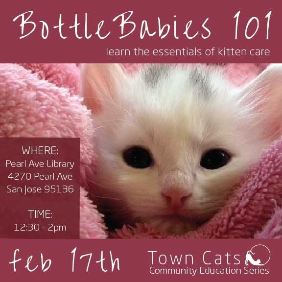 FEB 17th | Bottle Babies 101 As Part Of Town Cats 2018 Community Education Series