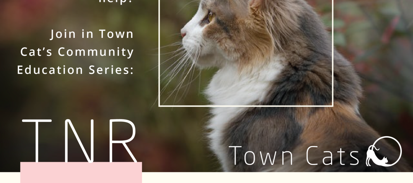 JAN 28th | TNR: Trap Neuter Release As Part Of Town Cats 2018 Community Education Series