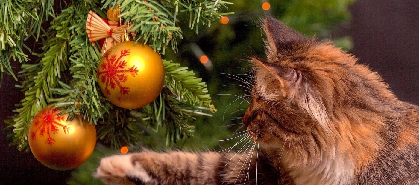 Cat Safety Tips for the Purrrfect Holiday Season!