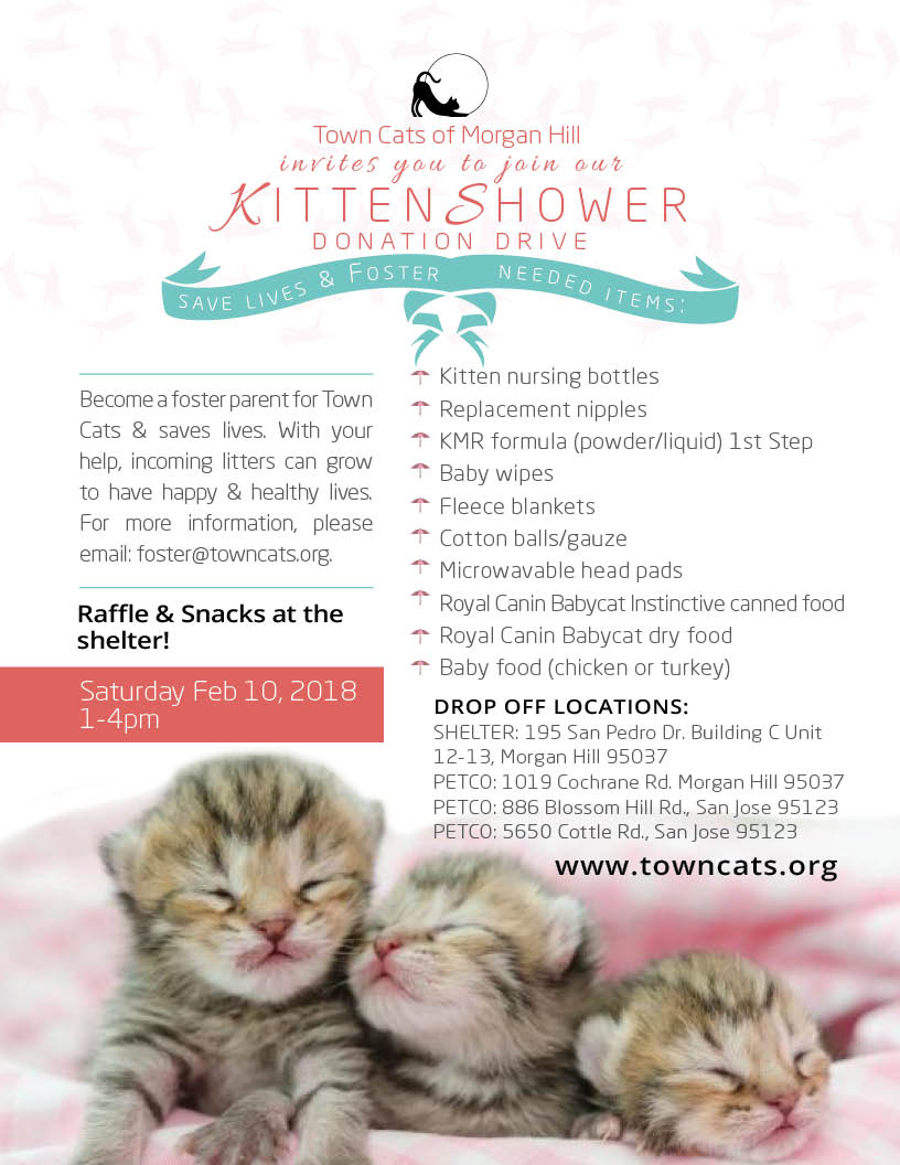 FEB 10 | Kitten Shower Donation Drive 1-4pm