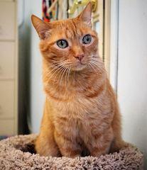 Legacy Cat #5
