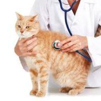 CatMedicalCare1
