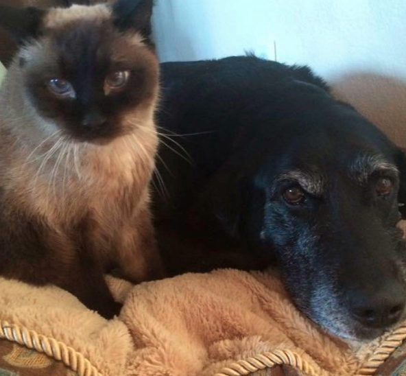 Cat-Dog Relationships