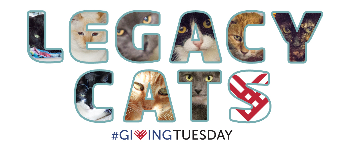 #GivingTuesday For Our Legacy Cats