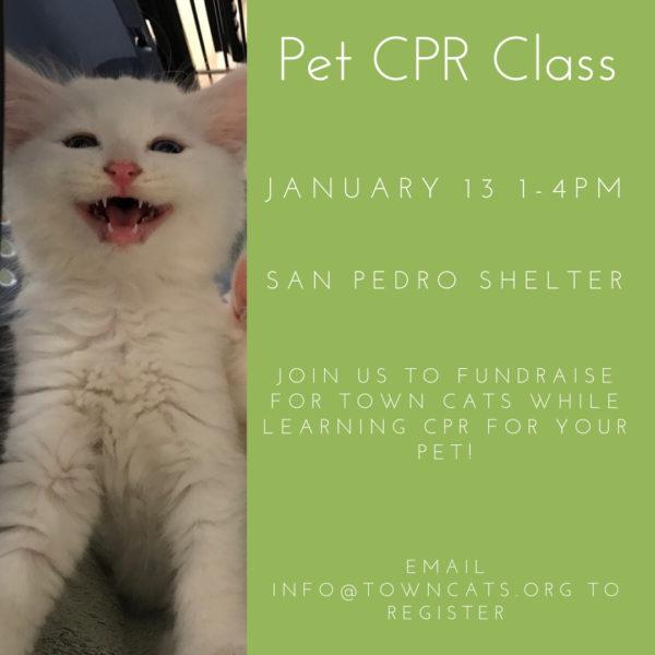 pet cpr class