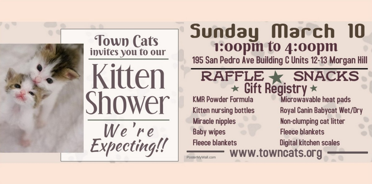 """Join us at our """"Kitten Shower"""" on March 10"""