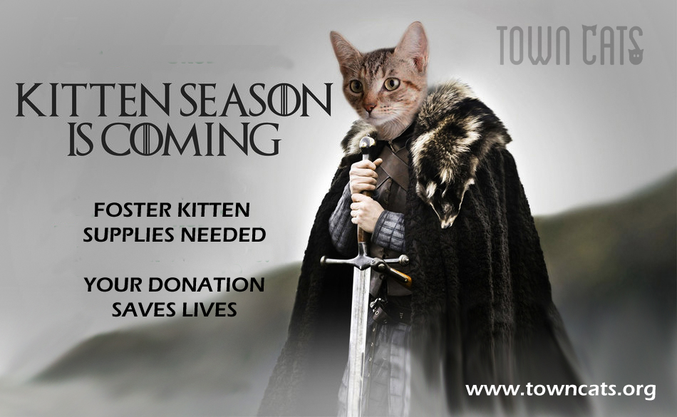 Kitten Season is Coming!