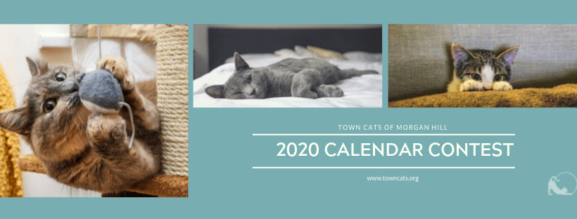 2020 Calendar Contest!