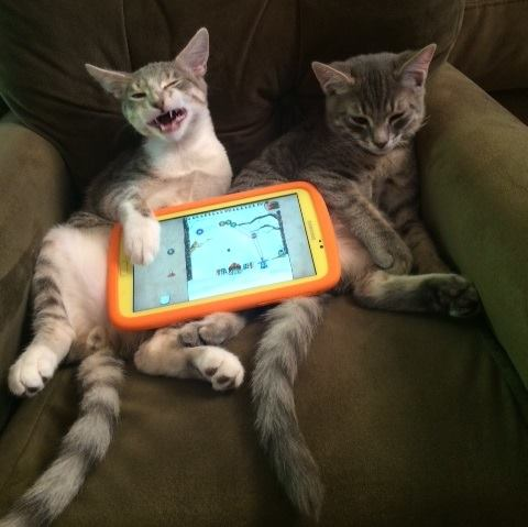 Cats using technology, is your wifi password safe?