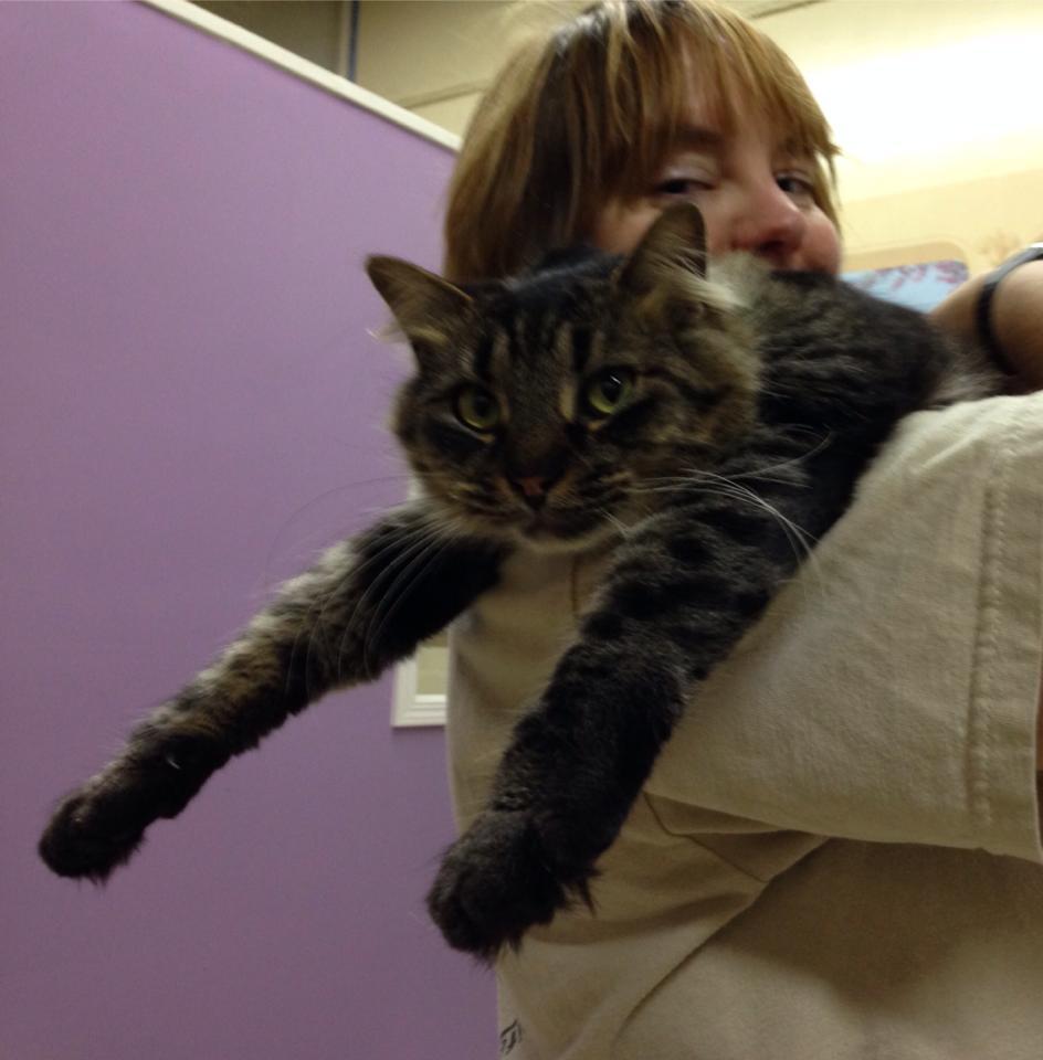 Meet Patty Guthrie – our own cat whisperer!
