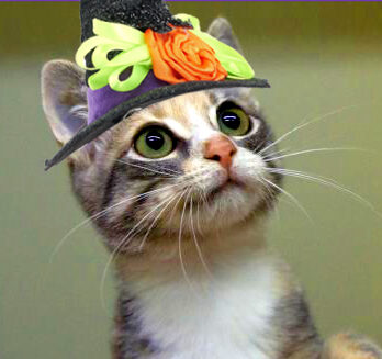 Safe Halloween Kitty Cats
