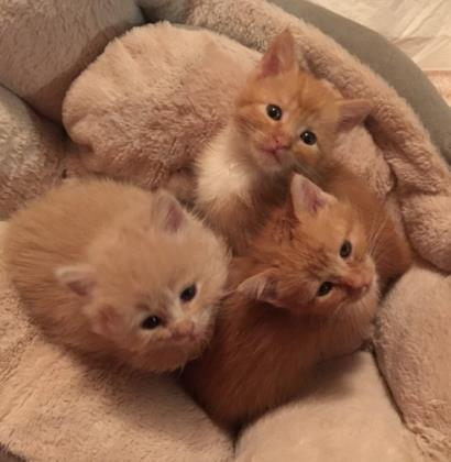 SPAZZY, MAZZY, AND JAZZY WILL MELT YOUR HEART!