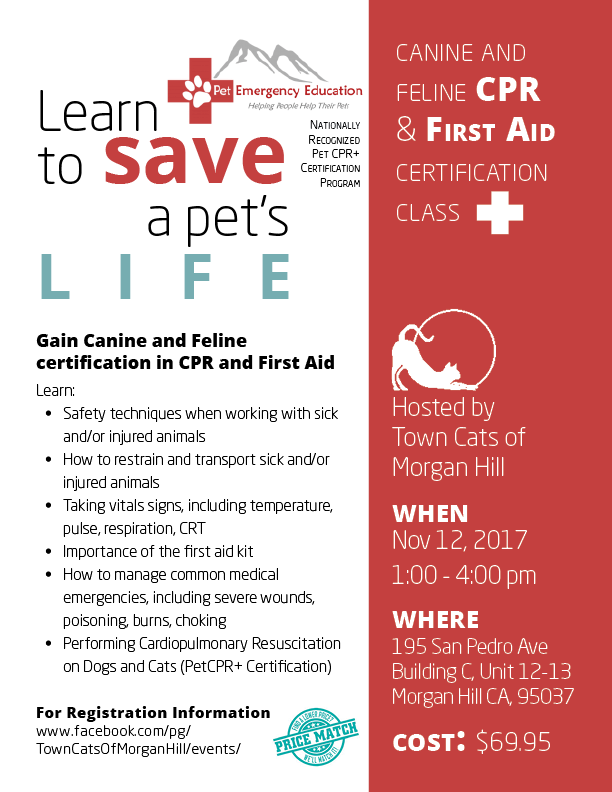 cpr aid feline cats certification pet save canine class gain learn town