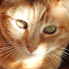 Legacy Cat #7