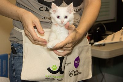 Jackson Galaxy Project: Town Cats Looking To Change Lives One Paw At A Time