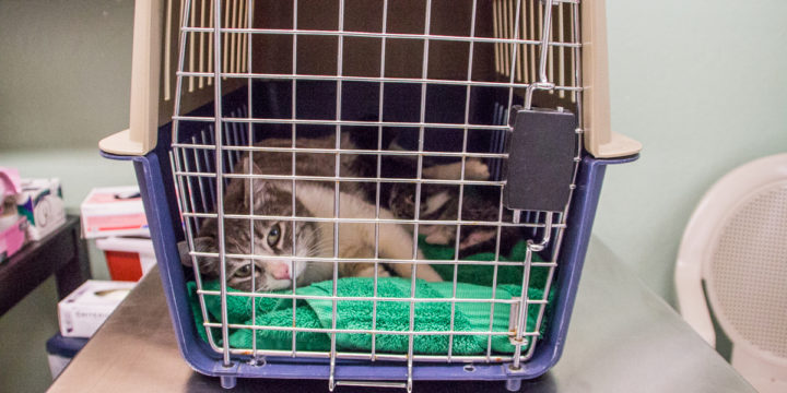 Vet's Corner with Dr. Tiva: How to Transport Cats Fear Free