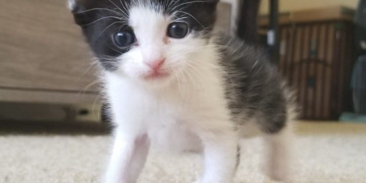 What Does It Mean to Foster a Cat?