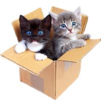 cats are wild in box
