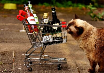 Is Cat Wine Safe?