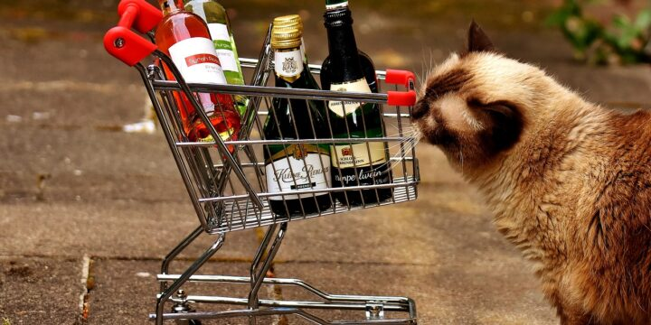 Is Cat Wine Safe?