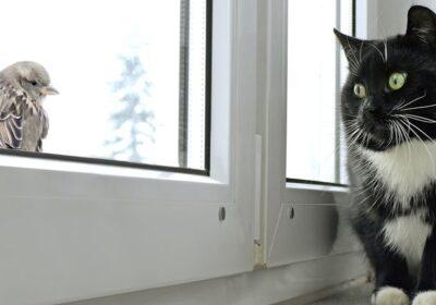 Birds Love Indoor Cats!